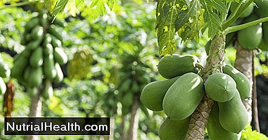 Papaya Leaf Tea Benefits